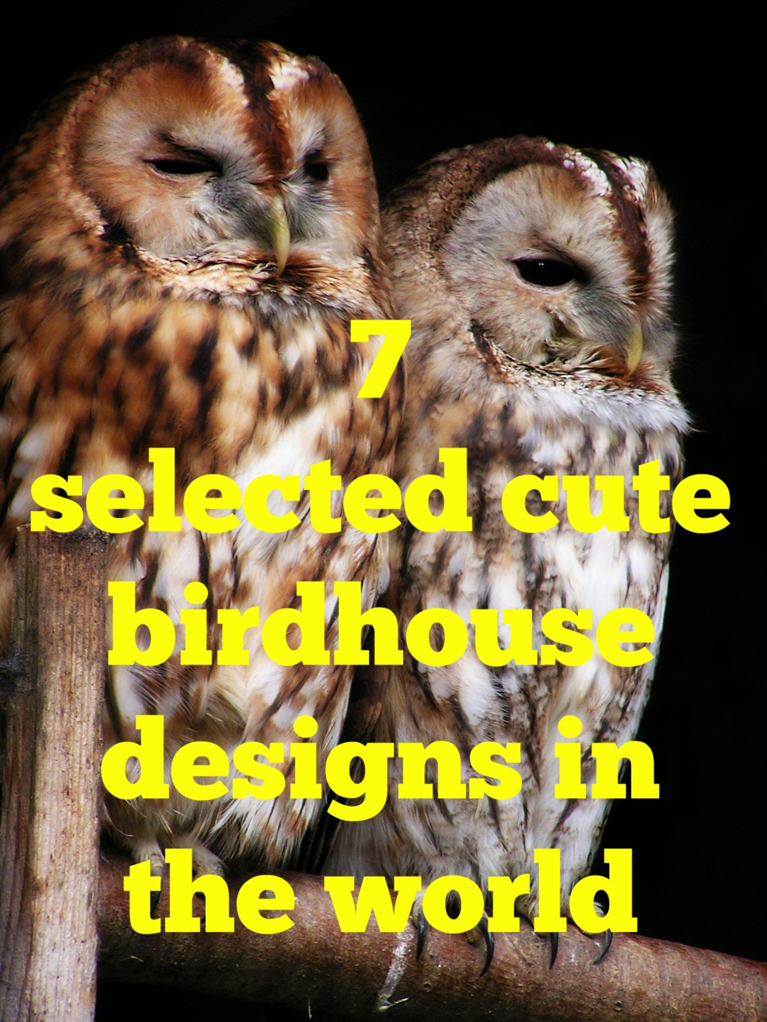 cute birdhouse designs